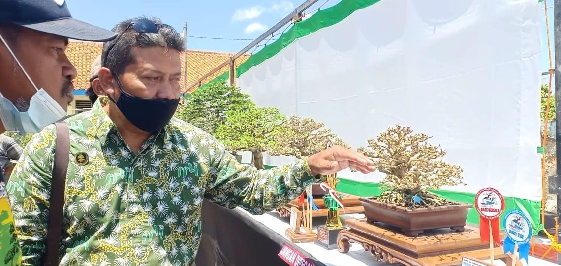 PPBI Menggelar Kontes Bonsai Dalam Rangka Lestarikan Alam